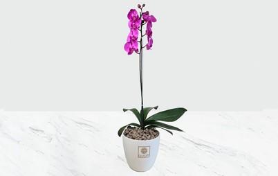 گلدان سرامیکی ارکیده بنفش