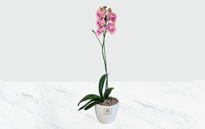 گلدان سرامیکی ارکیده صورتی