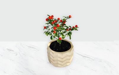 گلدان گوجه گیلاسی