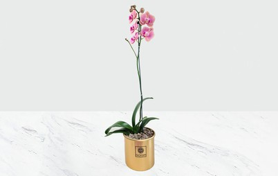 گلدان طلایی ارکیده