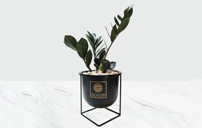 گلدان فلزی زامیفولیا