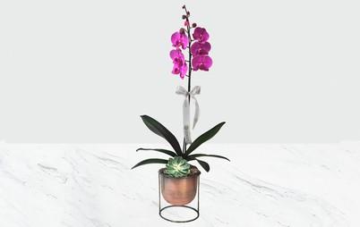 گلدان ارکیده صورتی