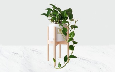 خرید گیاه جذاب پوتوس