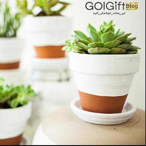 گیاهان آپارتمانی زینتبخش فضای خانه