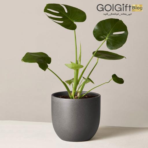 گیاهان آپارتمانی سبز و تصفیه کننده هوا