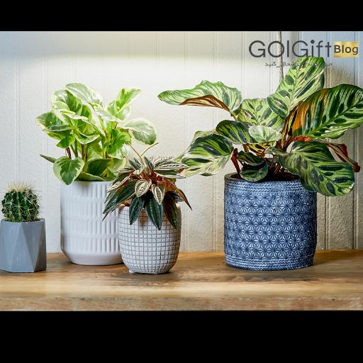 خصوصیات گیاهان آپارتمانی