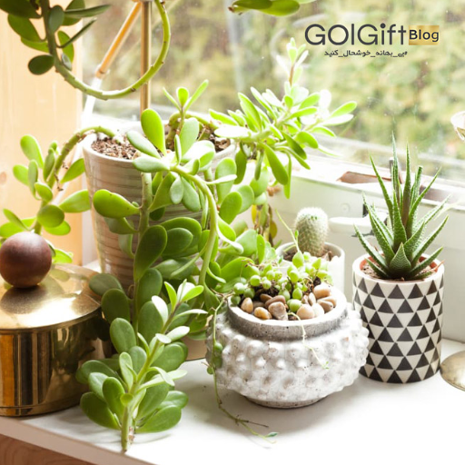 خرید اینترنتی گیاهان آپارتمانی