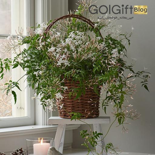 گیاهان طبیعی زیبایی بخش خانه