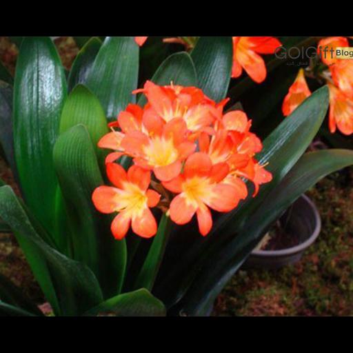 گل های همیشه بهار