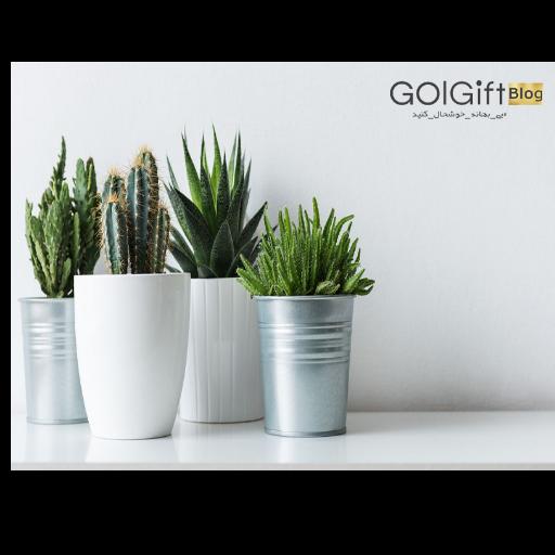 فواید گیاهان آپارتمانی برای اتاق خواب