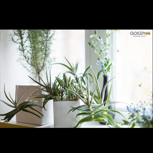 مقاومت گیاهان در زمستان