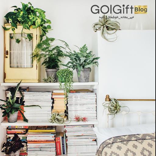 خرید بهترین گیاهان آپارتمانی