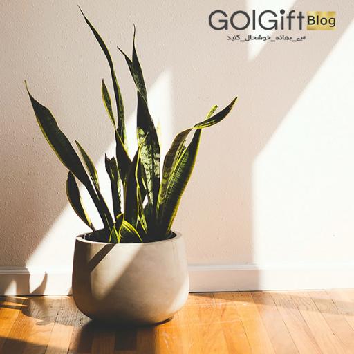 گیاهانی را انتخاب کنید که فضای محل زندگی شما شبیه منطقه بومی گیاه باشد