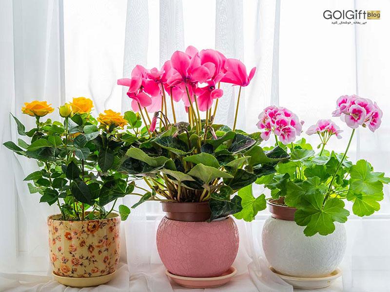 گیاهان همیشه گلدار آپارتمانی
