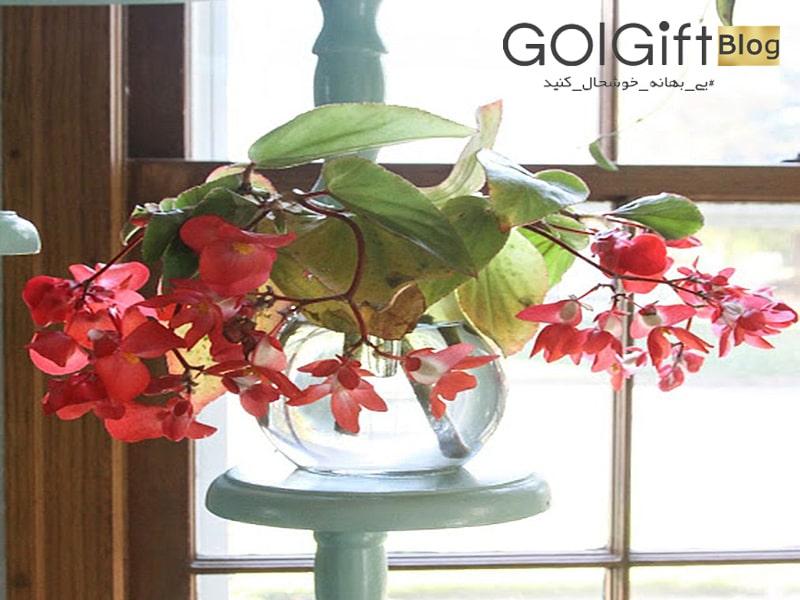 گل گیفت | گیاهانی که در آب رشد می کنند