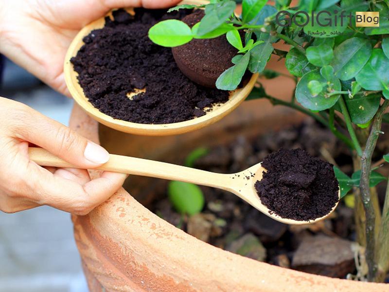 گل گیفت   بهترین کود برای گیاهان آپارتمانی