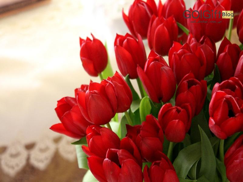گل گیفت   گل لاله