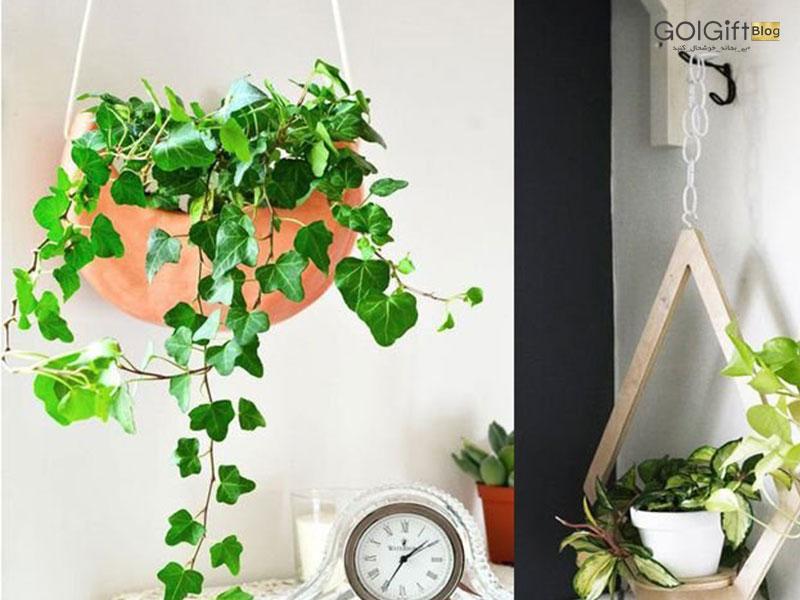 گل گیفت | انتخاب بهترین گیاه آویز آپارتمانی