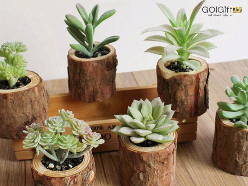 گل گیفت | معرفی گیاهان کوچک خانگی