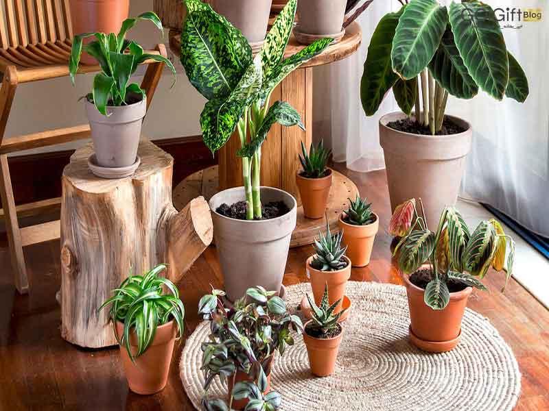 گل گیفت | نگهداری گیاهان در زمستان