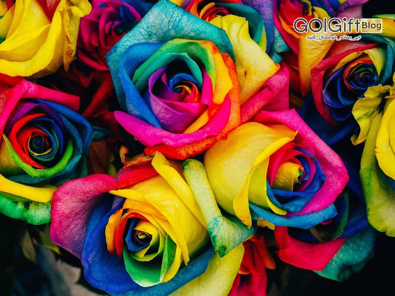 گل گیفت | رز جاودان هفت رنگ
