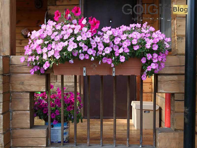 گل گیفت   گل مخصوص فلاور باکس