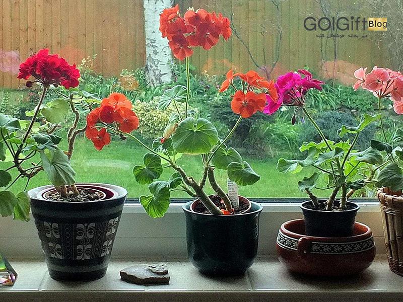 گل گیفت | دکوراسیون داخلی خانه با گل و گیاه