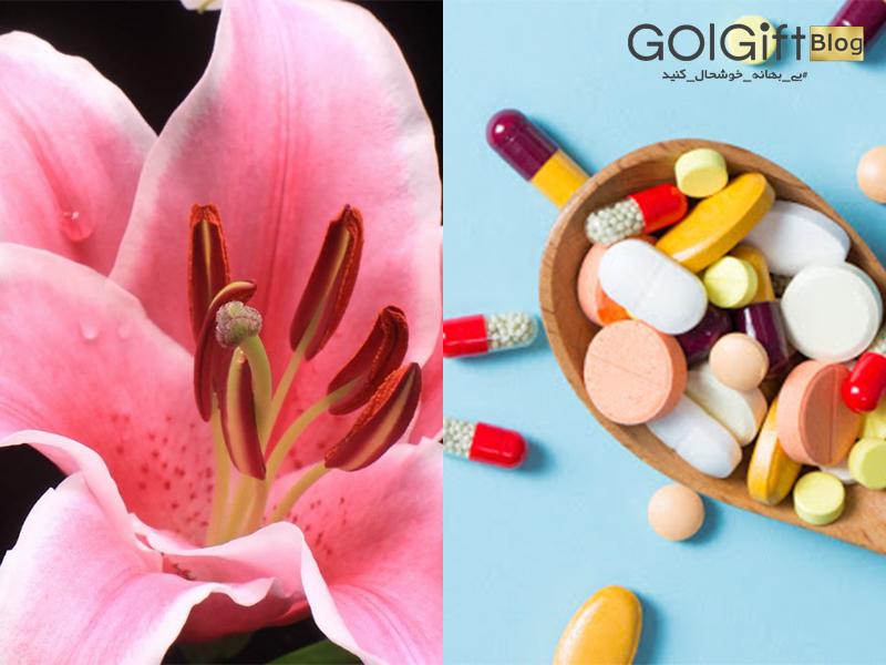 گل گیفت   مصارف دارویی گل لیلیوم