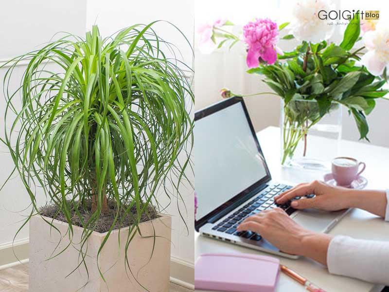 گل گیفت | فروش اینترنتی گل لیندا