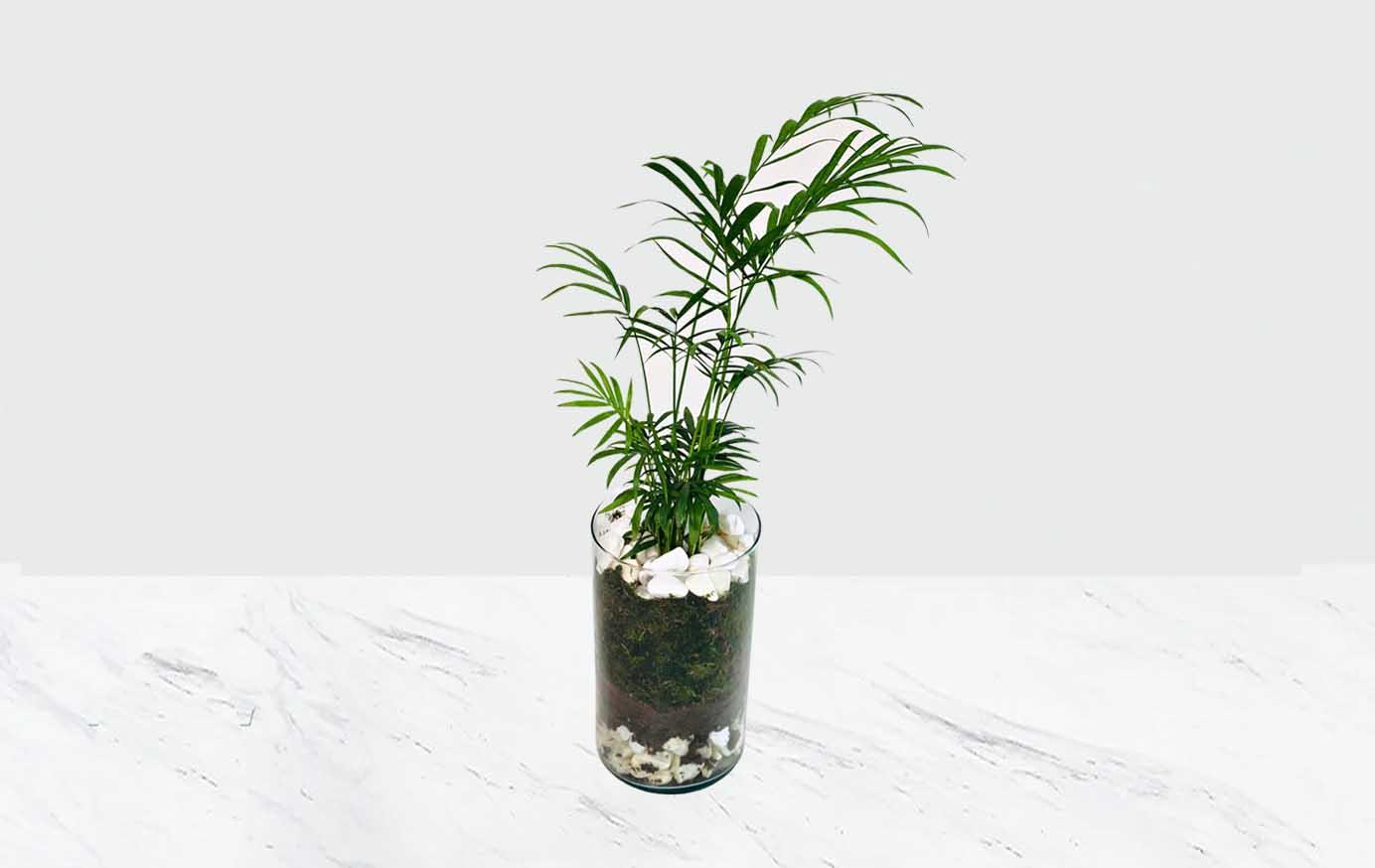 گلدان شیشه ای شامادورا
