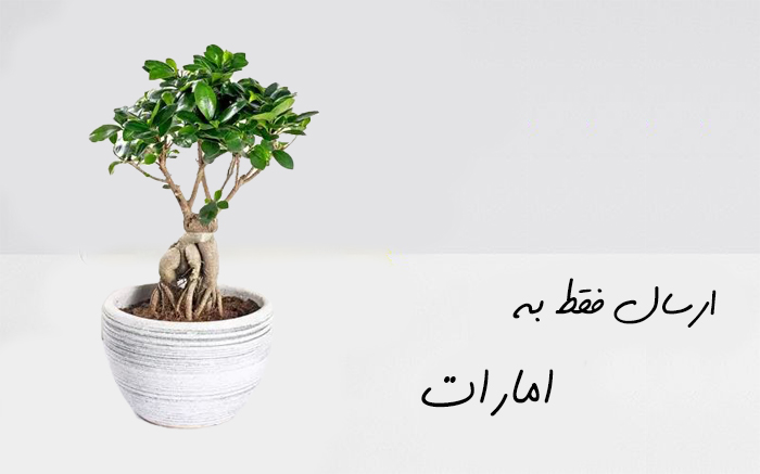ارسال گل به شارجه امارات