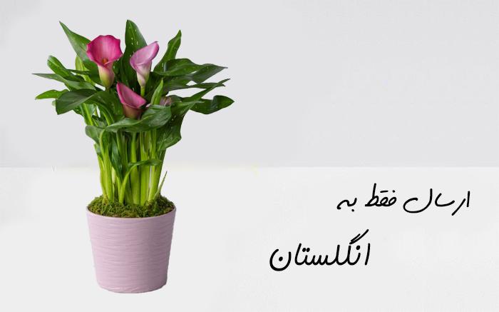 ارسال گلدان به انگلستان