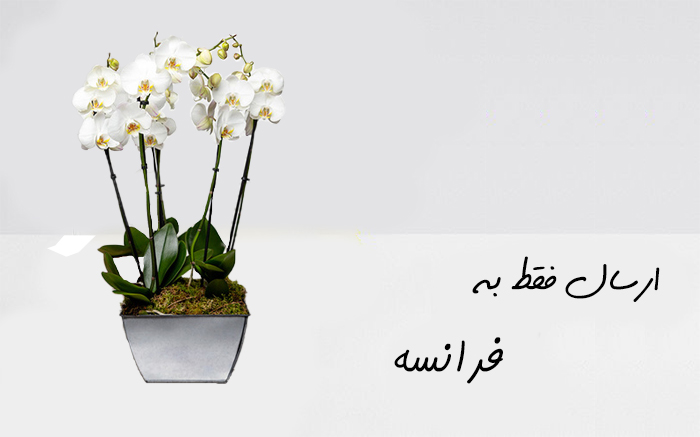 ارسال گلدان ارکیده به پاریس