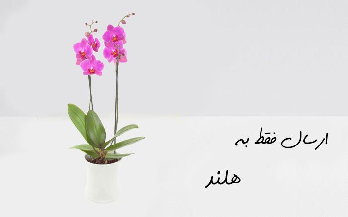 ارسال گل به روتردام هلند