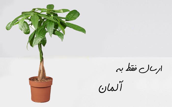 ارسال گل به برمن
