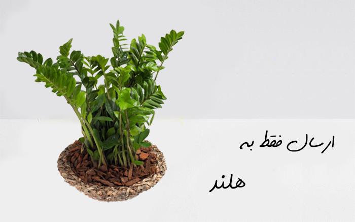 ارسال گیاه به هلند