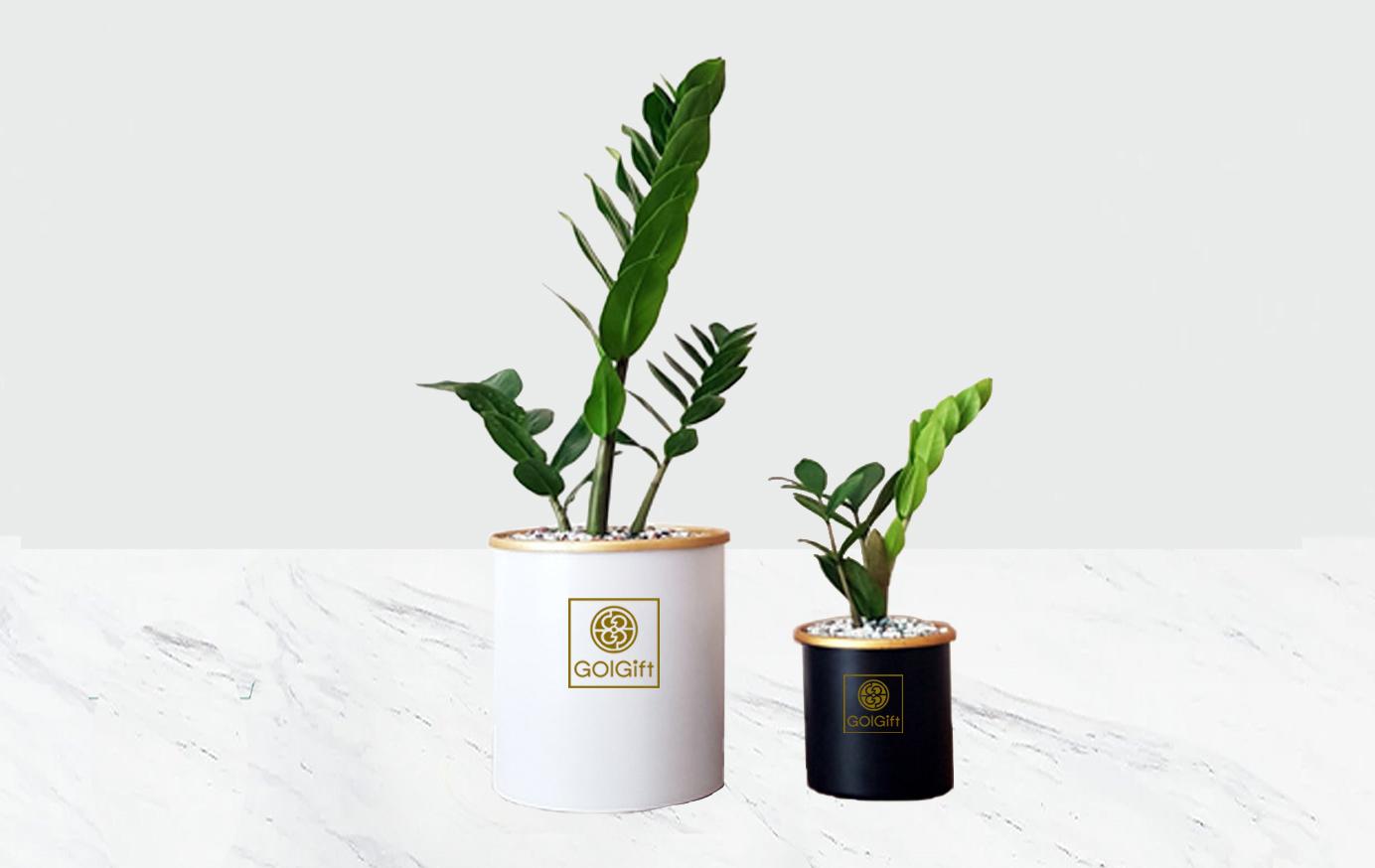 گلدان فلزی بدون پایه زامیفولیا