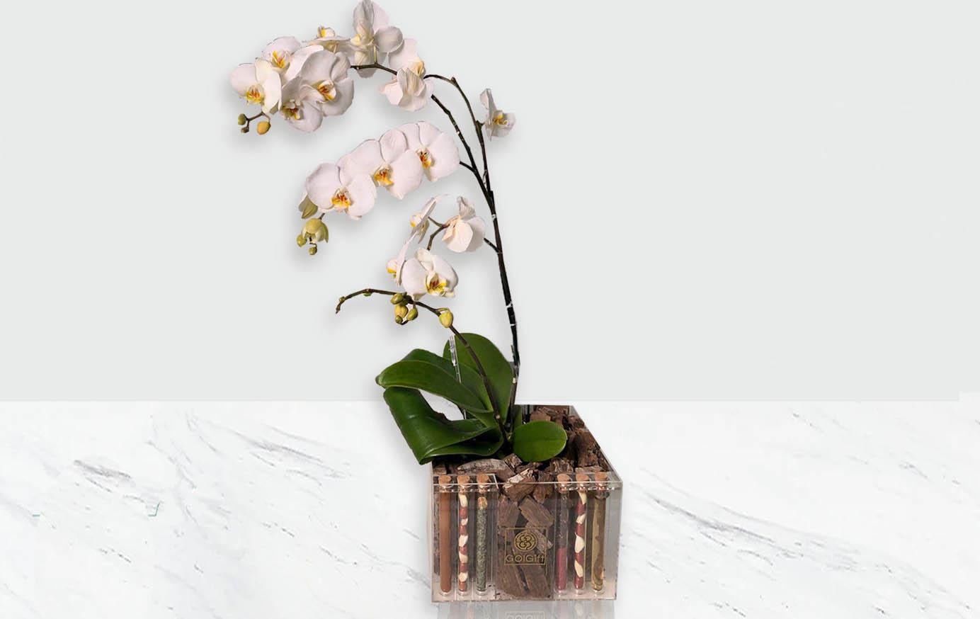 سفارش گل نوروزی