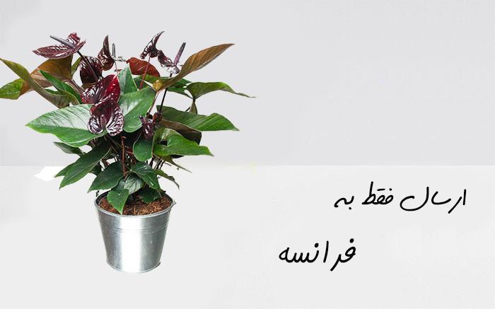 ارسال گلدان به شهر پاریس