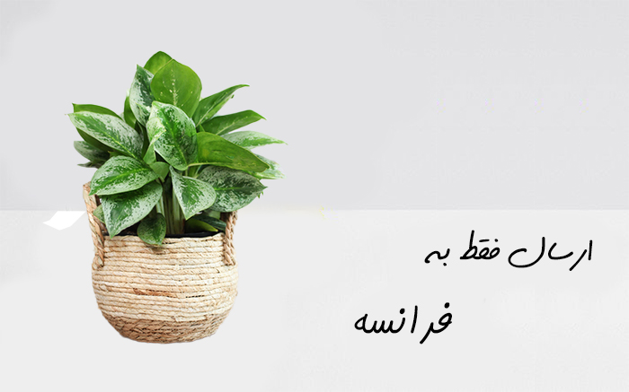 ارسال گیاه به لیون فرانسه