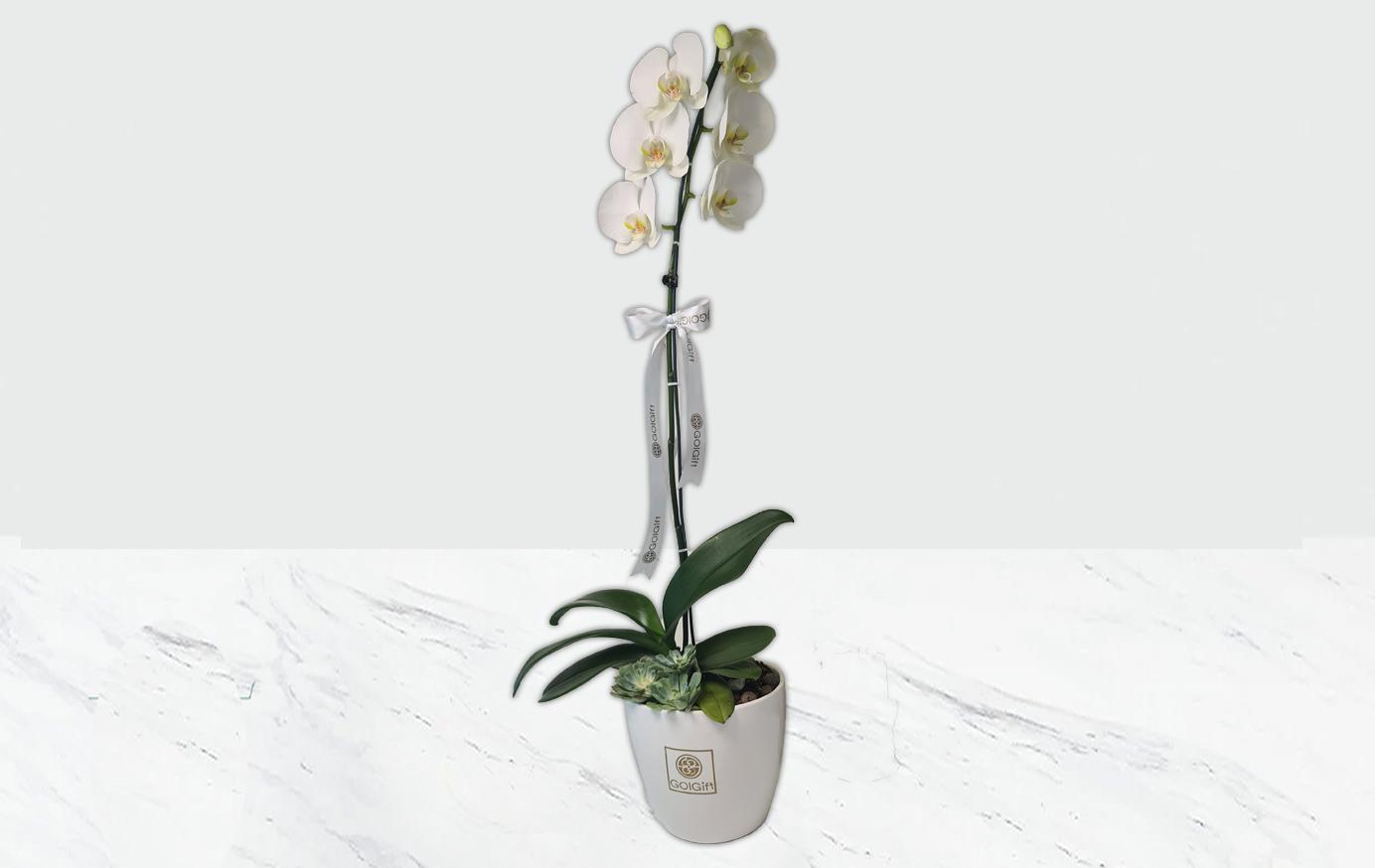 گلدان ارکیده سفید