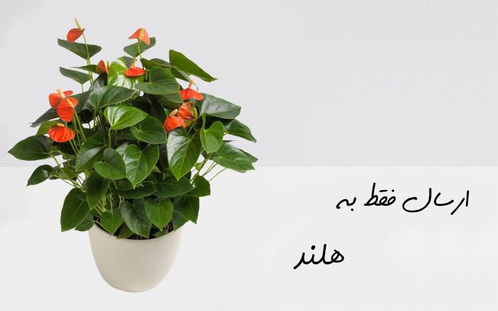 ارسال گیاه به امستردام